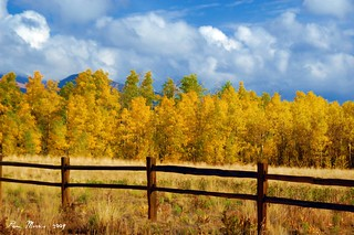 Aspen Afternoon | by pam's pics-