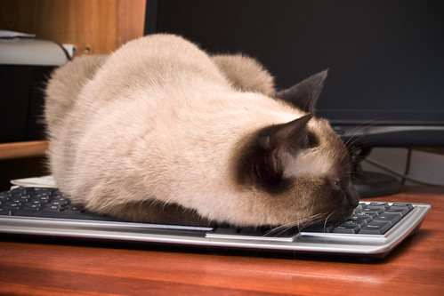 How To Be A Cat, Lesson 52: Keyboards | by Jim Skea