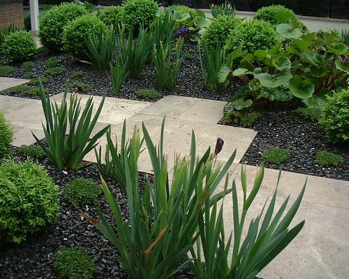 jard n urbano 2006 madrid farfugium japonicum buxus