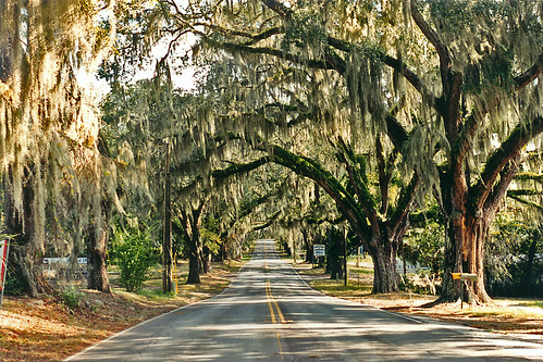 Orange Avenue, Floral City, Florida | I used to drive down ...