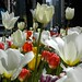 Tulips2006-1