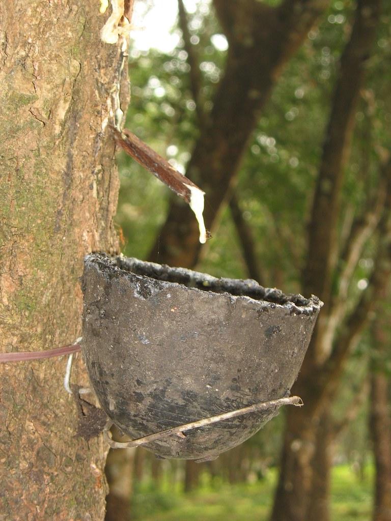 Congo rubber - Wikipedia