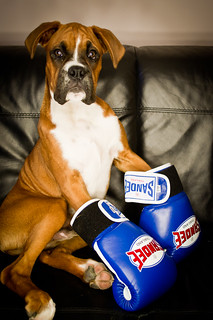 The Boxer | by Danny Beattie