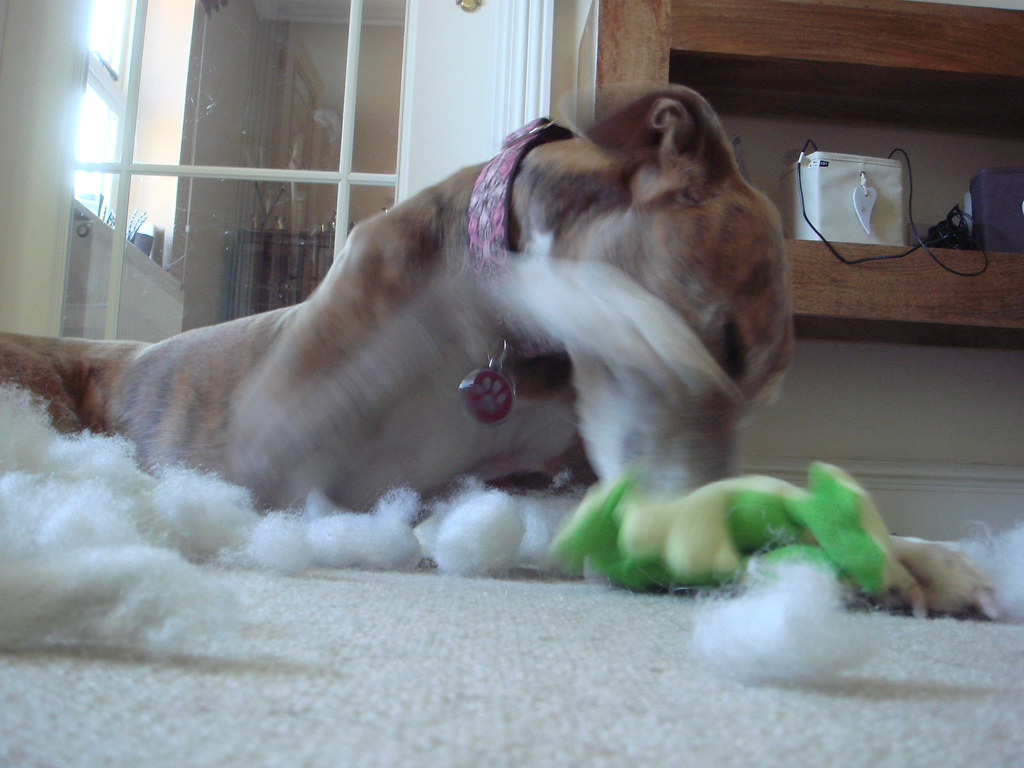 Cheap Dog Toys For The Holidays