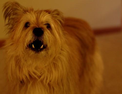 Dog Barks At Night When Alone