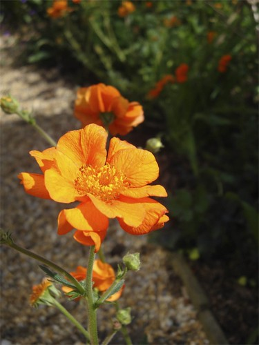 Geum Prinses Juliana | by James's GW Blog