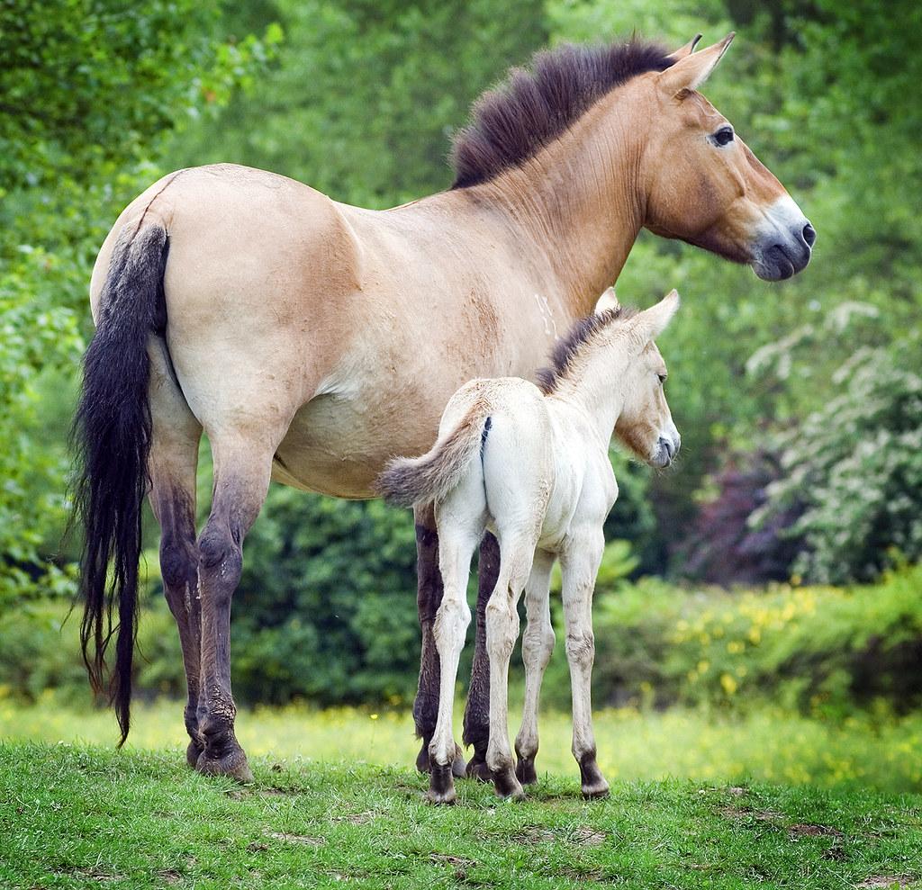 Related keywords  suggestions for quarter horse blue roan quarter b51