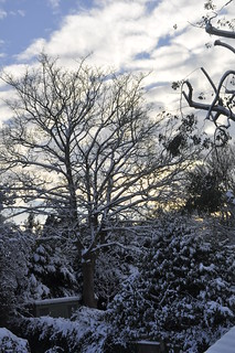 Snow covered trees in the back garden | by :) Katie