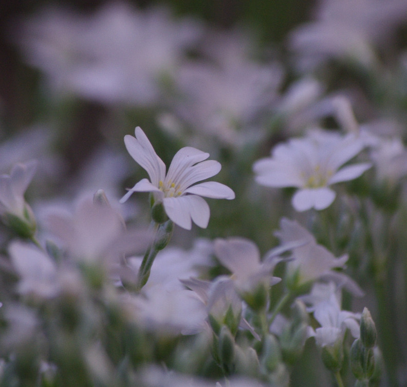 Fleur Corbeille D Argent R2c Mai 2011 Kolett29 Flickr