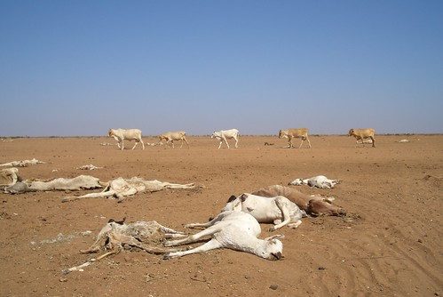 Kenya: drought leaves dead and dying animals in northen Kenya | by Oxfam International