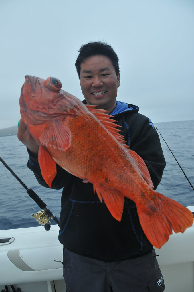 Red Rock Fish Red Rock Cod Fishing At Santa Barbara