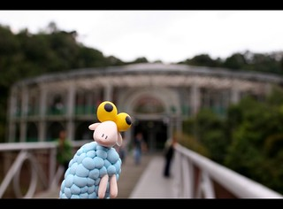 Sheep went to Opera de Arame | by Honey Pie!