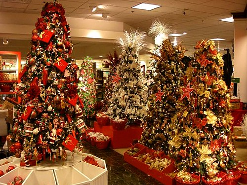 Christmas Trees In Hawaii