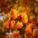 Ah! Autumn.