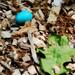 egg 1759 color