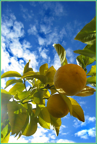 It's been all about a blue sky, white clouds and lemons this Sunday. | by Lulybelle