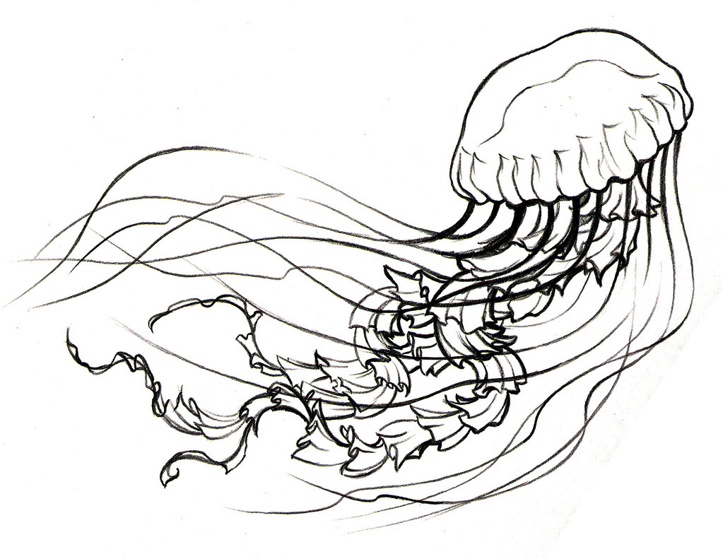 Jellyfish Line Art : Jellyfish sketch prep for tattoo