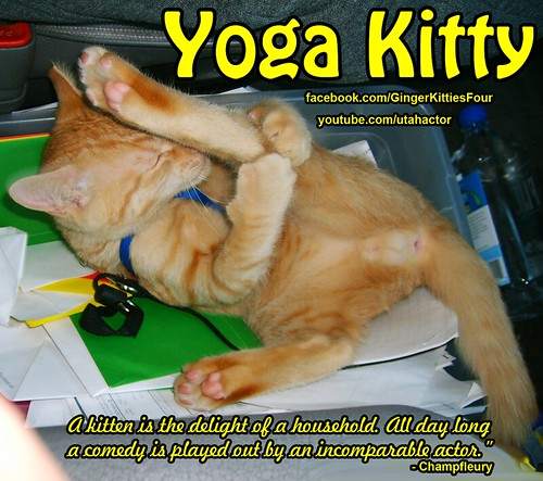 Yoga Kitty keeping fit | by Zeus & Phoebe youtube.com/utahactor