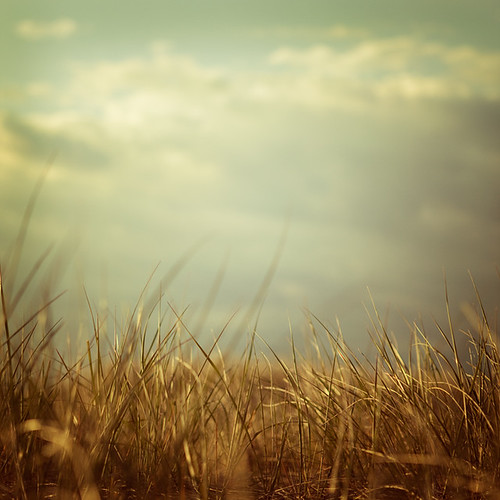 I remember lying in the grass and watching the clouds go by | by IrenaS