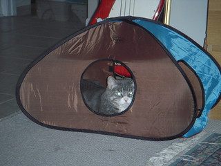 Guess who reconsidered life in the Kitty Tent | by Mirandala