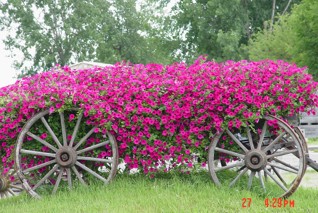 ... pink flowers in a wagon - by micheleart