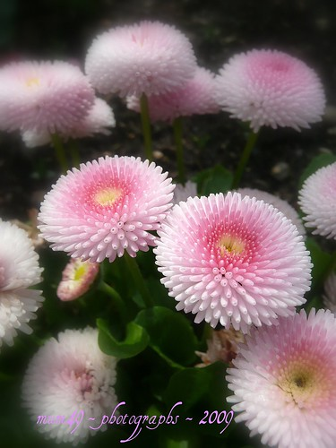 soft and pink... | by mum49
