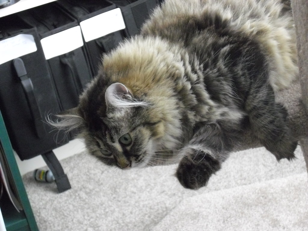 Cat Hasn T Eaten Or Drank In  Days