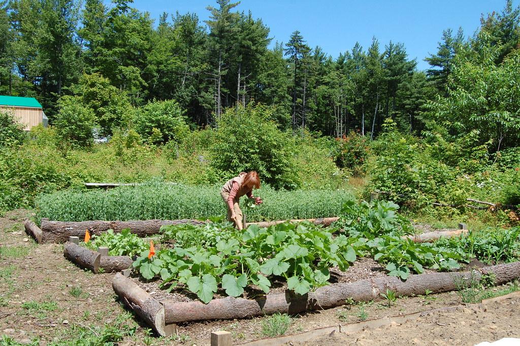 Jardin forestier en pleine for t un jardin de l gumes for Jardin foret