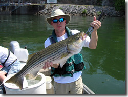 Fishing wheeler dam stripe fishing wheeler dam may for Wheeler lake fishing report