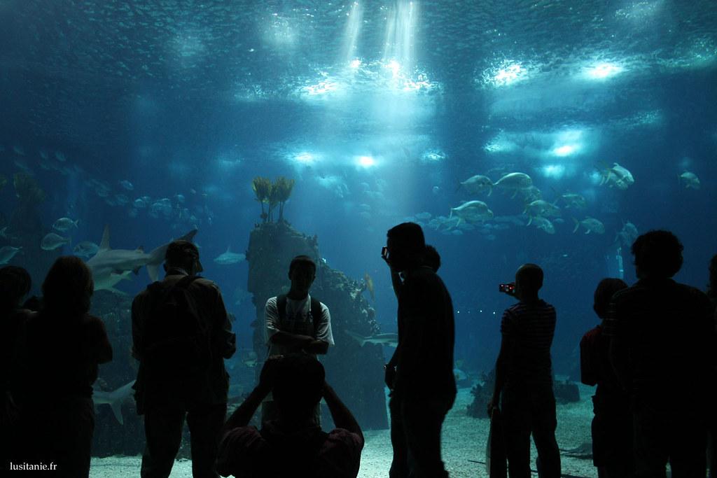C'est surréel, l'immensité des parois de l'aquarium principal