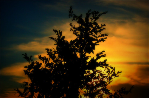 Backyard Sunset | by Dean Leh Photography