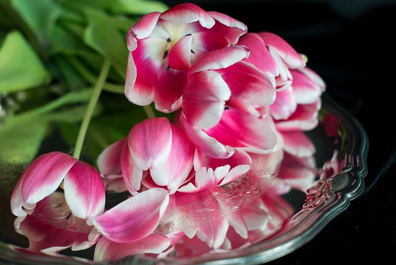 matognatur tulipaner03
