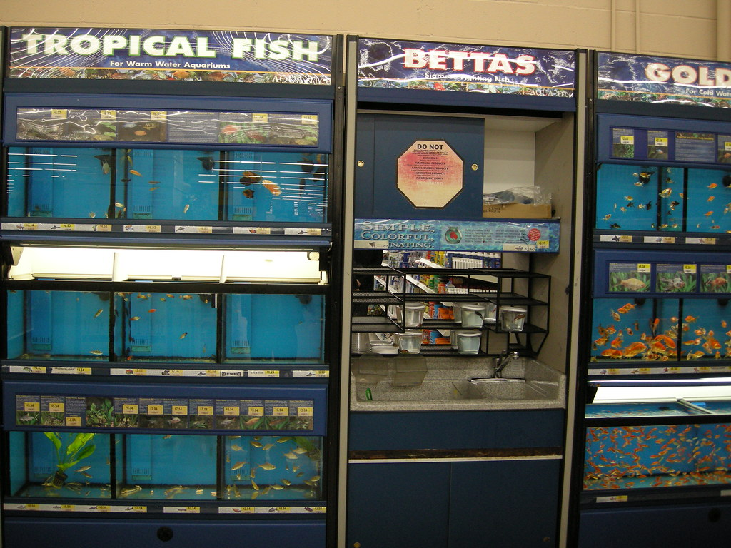 Walmart fish for sale robert stockdill flickr for Whiting fish at walmart