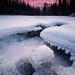 Winters Grasp