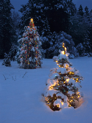 Christmas tree lights in the snow anthony dunn flickr