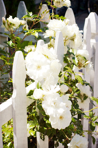 White Picket Fence ~ Balboa Island | by Abby Lanes