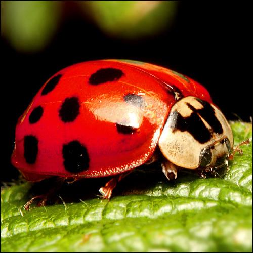 ~ Ladybug  Ladybird ~ | by ViaMoi