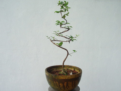 Seed planting Bonsai | by tantk99