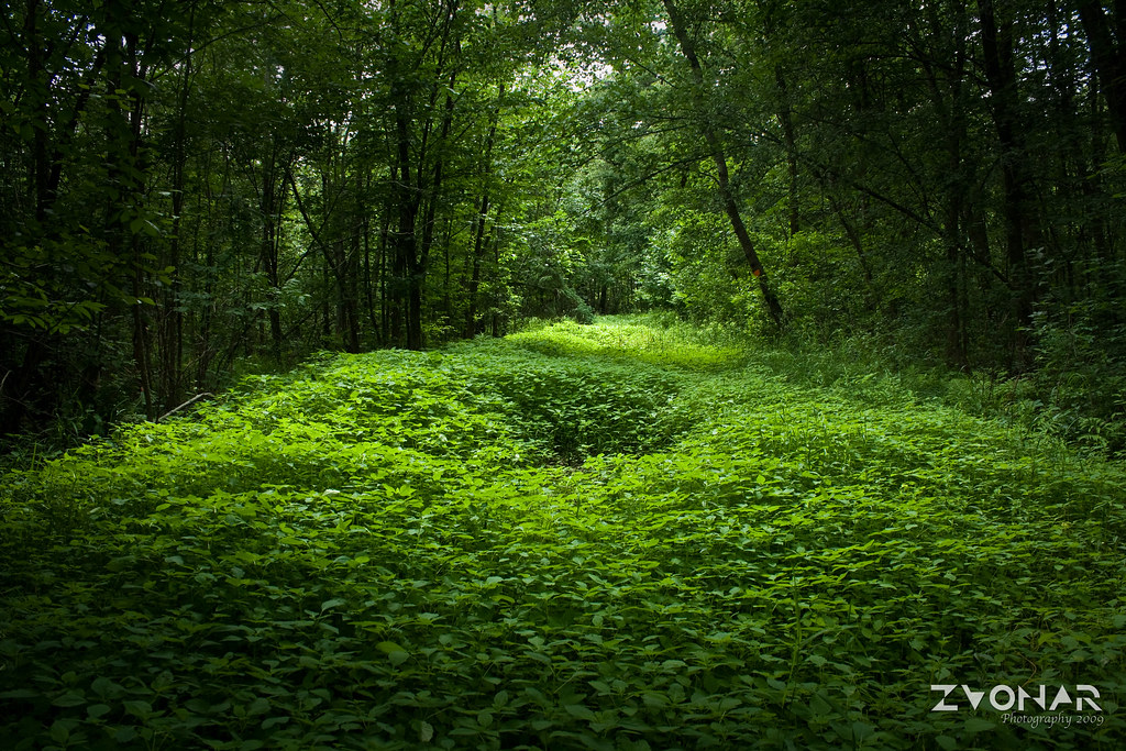 Lush green forest images galleries for Silverleaf com