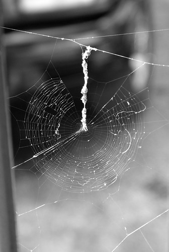 Spider Web 2 Black and white | by thewaltonsare