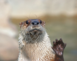 High five.... | by nhpanda (always trying to catch up....)