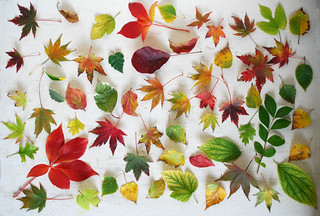 AUTUMN LEAVES | by (^-^) SUE (^-^)