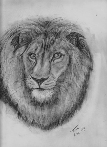 Lion | by Tinkbad