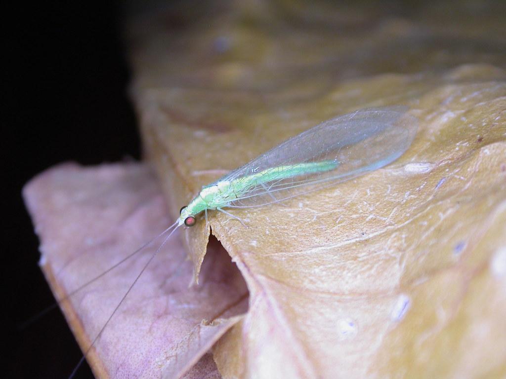 Bộ sưu tập côn trùng 2 - Page 24 3832548312_48aa2a263a_b