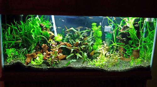 55 gallon planted aquarium a handful of new plant for 55 gallon fish tank setup