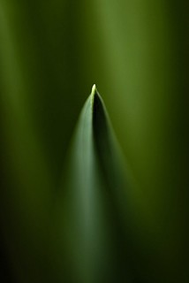 Leaf Tip | by J e n s