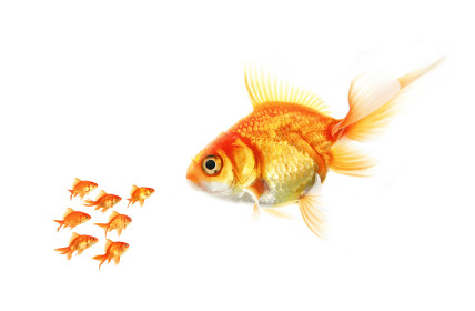 Big Fish Little Fish Business Small Business Tips On