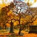 Autumn cemetary 2