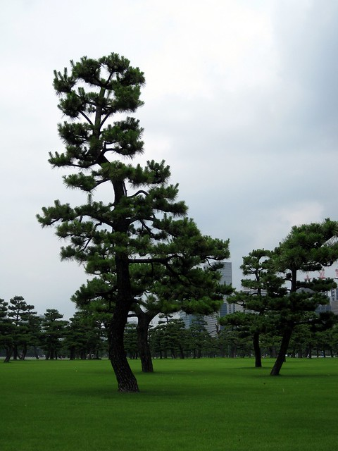Imperial palace outer garden flickr photo sharing for Outer garden