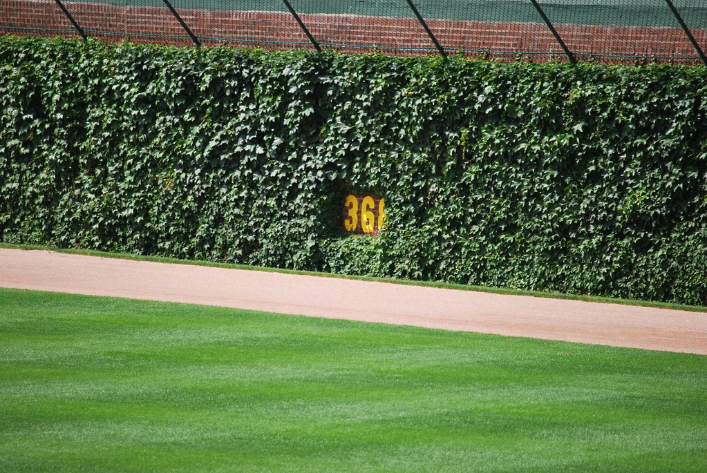 Wrigley Field tour | A close-up of the ivy in left-center ...